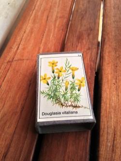 Boîte d'allumettes décorées de Douglasia Vitaliana