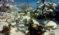 雪が降っていたんです / It snowed / Il a neigé