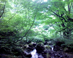 Forêt au pied de Suzugatake