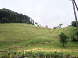 View of the Pasture above Hof Waldenstein