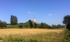 A pink church in a yellow field with a blue sky in the background.