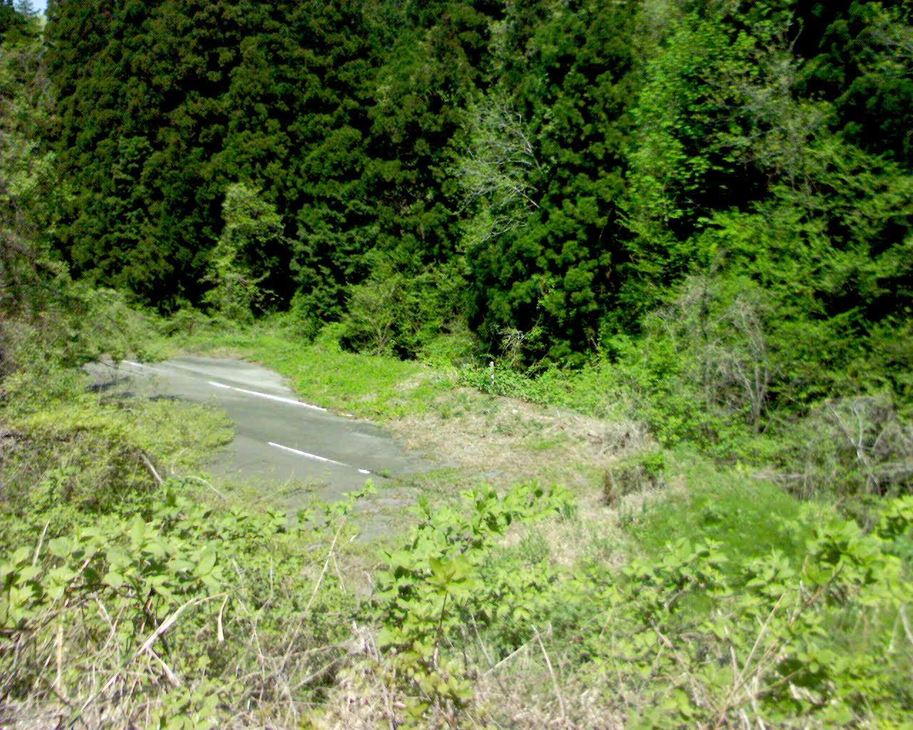 Une route abandonnée envahie par la végétation