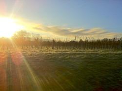 Soleil Levant sur les Vignes