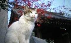 De la réincarnation des chats